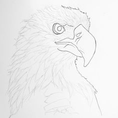 Illustrating bald eagles today- Sometimes the world gives you random things to draw. #wip #Art #design #Eagle