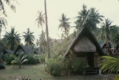 Club Med guest cottage with coconut palms all around