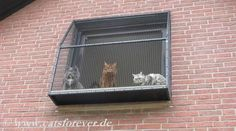 Fensterkäfig für Katzen, Der Katzenbalkon oder Fenstervoliere genannt, ist der Fensterplatz für jede Katz