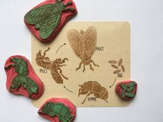 Cicada life cycle set cointains four stamps: eggs about 0,6 x 0,6 / 1,5cm x 1,5cm nymph 1,2 long / 3cm molt 1,6 tall / 4cm adult cicada 1,8 long x 1,2 wide / 4,5cm x 3cm    This is really fun way to educate - children could use the stamps to make their own lifecycle diagrams and story lines. Each set of my life cycles stamp includes a card made all by my hand (stamp & write) on unique sheet from 90s notebook and laminated by friend in local print shop. Measures of car...