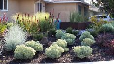 Maintaining Curb Appeal During a Drought | Heather Green | LinkedIn