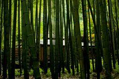 報国寺(竹寺)その2@鎌倉 - みんなの写真コミュニティ「フォト蔵」