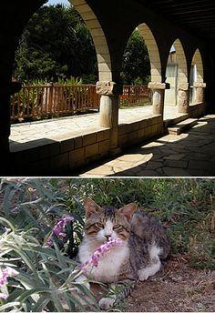 St. Nicholas of the Cats (Ayios Nikolaos ton Gaton) Monastery.  Greek Orthodox.  Akrotiri, sw of Limassol, Cyprus