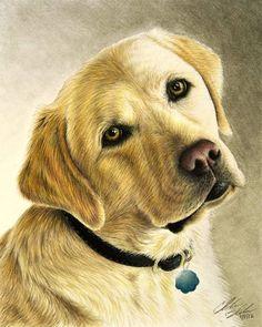 Собаки – 54 фотографии