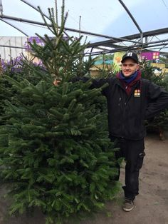 Hugo & the #RealChristmasTrees in Horkans #Galway #christmas #xmas #feelingfestive