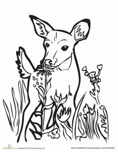 Fawn Coloring Page Forest CreaturesForest AnimalsAnimal