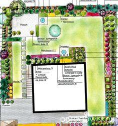 Ogród pod sosnami - Forum ogrodnicze - Ogrodowisko