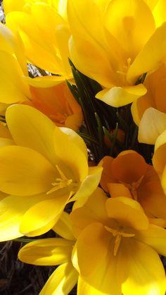 more Easter weekend flowers