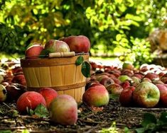 Happy At Work, When You Are Happy, Apple Harvest, Apple Orchard, Apple Recipes, Light In The Dark, The Originals, Creative, Flowers