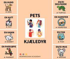 Norwegian Words, Languages, Norway, Learning, Corona, Dog, Idioms, Teaching, Studying