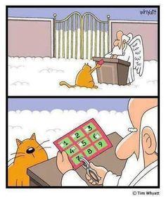 Cat humor! #cat #9lives
