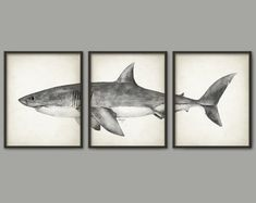 Great White Shark Watercolor Art Poster Set Of 3 - Shark Art Print - Great White Shark Poster - Bathroom Wall Art - Marine Biology This set of 3 watercolor Great White Shark art prints has been created from an original watercolor painting made by me and Shark Bathroom, Bathroom Wall Art, Art Aquarelle, Watercolor Art, Great White Shark Drawing, Shark Room, Shark Nursery, Shark Painting, Arte Black