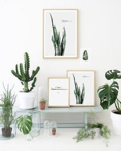 house plants, succulents, cactus and indoor gardens | potted plants and botanical design for the indoor garden #cactusindoor
