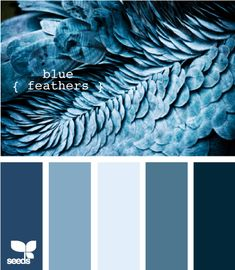 Design Seeds - blue feathers