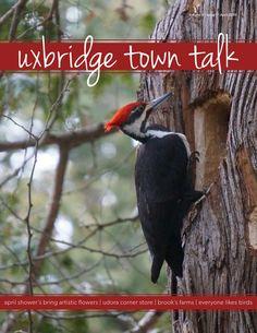 Uxbridge Town Talk - April 2016 Local Magazine, April Showers, Bring It On, Artist, Artists