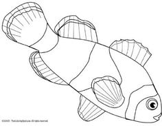 Worksheet. Tropical Fish Coloring Pages  Download this printable Nemo fish
