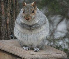 Such a fat squirrel!!