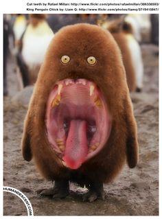 23 Crazy and Bizarre Animal Mash-Ups Bizarre Animals, Rare Animals, Funny Animals, Weird Pictures, Funny Animal Pictures, Photoshopped Animals, Animal Mashups, Funny Photoshop, Creature Feature