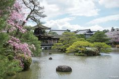Heian Jingu : le sanctuaire aux cerisiers pleureurs - http://www.kanpai.fr/japon/heian-jingu-kyoto.html