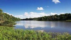 29 - Los exuberantes bosques de neblina del Parque Nacional del Manu han sido declarados Patrimonio Universal de la Humanidad, paraíso de la biodiversidad y colosal orgía de la luz natural.