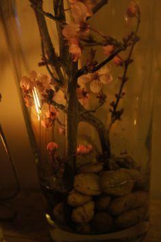 Spring in vase...