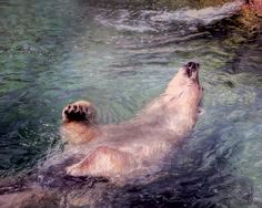 Polar bear, swimming on his back at Toronto Zoo, photo art by Pennie McCracken.
