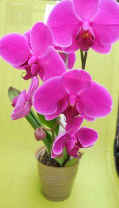 Que bonitas son las orquídeas!