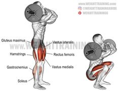 Use the barbell front squat, a major compound exercise, as your primary quad-dominant movement or as an auxiliary exercise to improve your barbell squat. Leg Day Workouts, Lifting Workouts, Weight Training Workouts, Squat Workout, Gym Workout Tips, Squat Exercise, Weight Training For Beginners, Leg Training, Strength Training