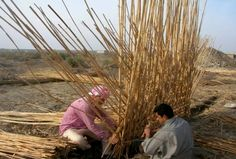 Adobe And Reeds In Construction Local contractors construct the inner walls of a marsh Arab mudhif. The reeds are gathered from marshlands near the Euphrates River. The house is a blend of adobe and reed building materials used frequently by marsh Arabs in southeast Iraq.