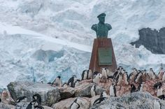 photo essay elephant island antarctica antarctica penguins  photo essay elephant island antarctica