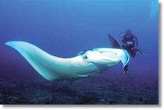 Mozambique Diving Tours