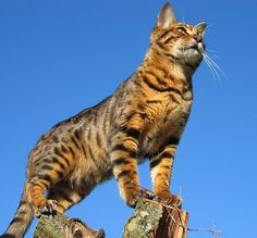 Hugo looking for prey?? by Truddles2009, via Flickr