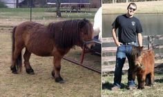 Mr Nubby the miniature horse found shot and skinned in a pond