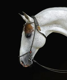photo: Artur Baboev, the supreme photographer of the breed. Most Beautiful Horses, All The Pretty Horses, Zebras, Horse Markings, Akhal Teke Horses, Majestic Horse, Painted Pony, Clydesdale, Horse Pictures