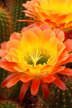 Cactus flowers would be awesome for my bday tattoo present