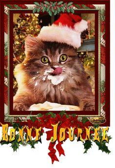 IMAGES DRÔLES OU EMOUVANTES.... - BIENVENUE CHEZ NOUNETTE Cavalier King Charles, Painting, Small Animals, Funny Pictures, Gentleness, Bite Size, Cat Breeds, Painting Art, Paintings