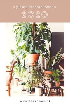 Read about our top 5 // Plant trend 2020 This Is Us, Planters, Top, Plant, Window Boxes, Crop Shirt, Shirts, Pot Holders, Flower Planters