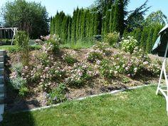 Böschung im Garten gestalten - Seite 1 - Gartengestaltung - Mein schöner Garten online