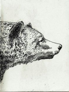 bear pen and ink drawings