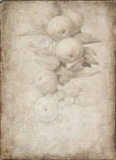 Reintroducing the Silverpoint Technique - Drawing Academy Renaissance Time, Silverpoint, Art Articles, Drawing Techniques, Botanical Art, American Artists, Art World, Printmaking, Art Drawings