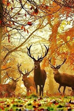 Deer in Autumn