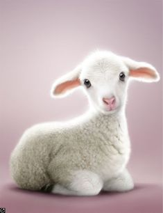 Image discovered by Alyson Townsend. Find images and videos about cute animals, sheep and lamb on We Heart It - the app to get lost in what you love. Cute Little Animals, Cute Funny Animals, Cabras Animal, Cute Lamb, Sheep Art, Cute Sheep, Barnyard Animals, Baby Lamb, Sheep And Lamb