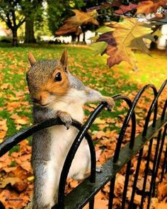 Cheeky squirrel in St James Park, Photo by Animals And Pets, Baby Animals, Funny Animals, Cute Animals, Strange Animals, Beautiful Creatures, Animals Beautiful, Cute Squirrel, Squirrels
