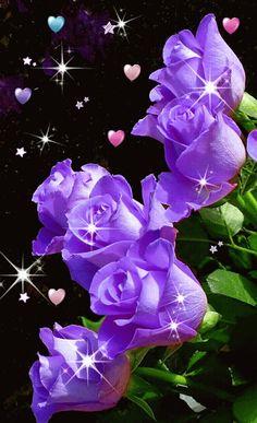 A beleza das cores das rosas ! Tudo isso mostra a presença de Deus!  Tenha uma linda noite de muita luz!