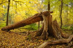 Image result for fallen tree