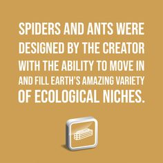 Spiders and ants were designed by the Creator with the ability to move in and fill Earth's amazing variety of ecological niches. Discover more: A Texas-Size Spider Mystery Institute For Creation Research, Spiders, Ants, Discovery, The Creator, Mystery, Fill, Texas