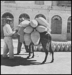 https://flic.kr/p/FmXVtL | Αίγινα, στάμνες φορτωμένες σε υποζύγιο. | Βούλα Παπαϊωάννου, Φωτογραφικό Αρχείο Μουσείου Μπενάκη.
