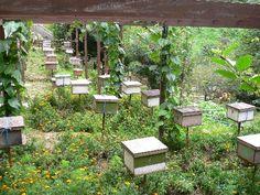 honey bee heaven