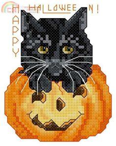 <3 black cat in pumpkin