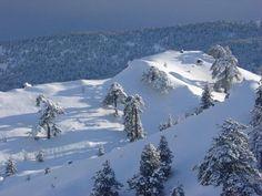 Fresh snow in Cyprus, Mt Olympus